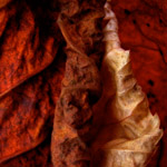 Kenneth A. Huff; <em>Fallen forms, found</em>; 2006; photography.